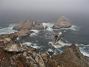Farallon Islands - photo copyright Hugh D Scott