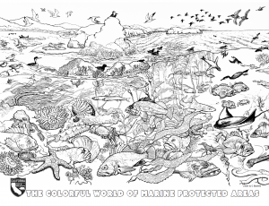 wildlifedepartment coloring pages - photo#3